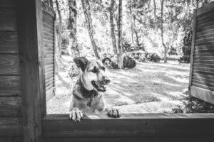 Darlowo-z-psem-blog-psi-prawieowczarkowelove02-300x200