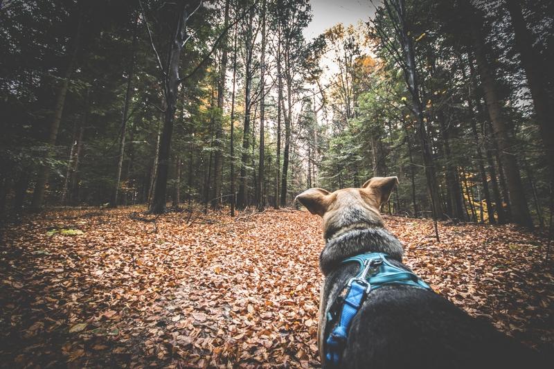 Rezerwat-z-psem-blog-psi-prawieowczarkowelove18