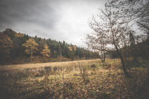 Rezerwat-z-psem-blog-psi-prawieowczarkowelove23-300x200