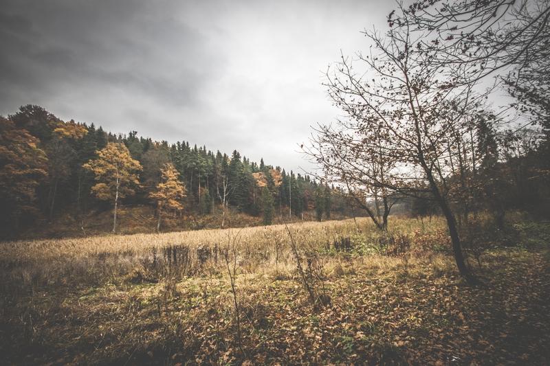 Rezerwat-z-psem-blog-psi-prawieowczarkowelove23