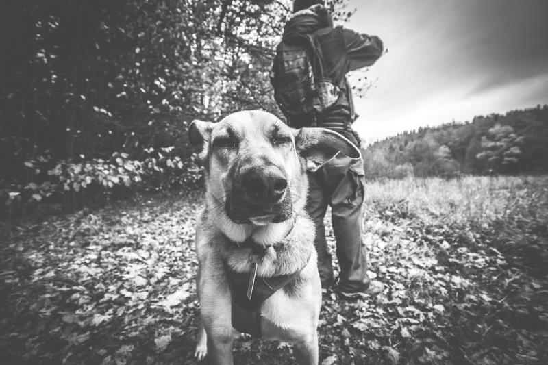 Rezerwat-z-psem-blog-psi-prawieowczarkowelove24