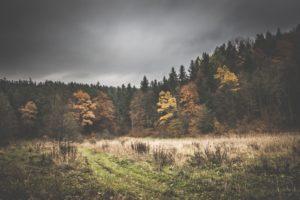 Rezerwat-z-psem-blog-psi-prawieowczarkowelove28-300x200