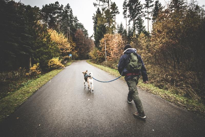 Rezerwat-z-psem-blog-psi-prawieowczarkowelove29
