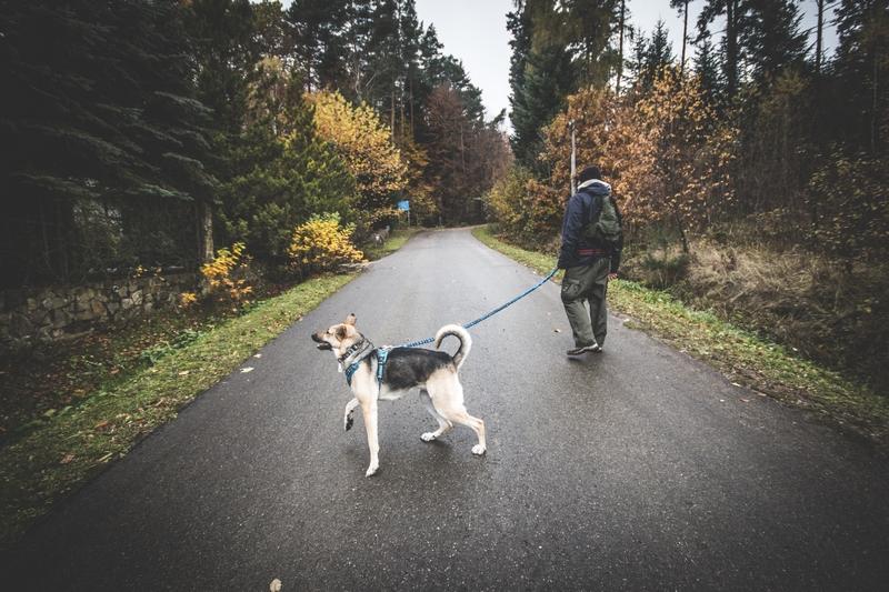 Rezerwat-z-psem-blog-psi-prawieowczarkowelove30