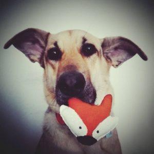 przydatne-komendy-fotografowanie-psow-blog-psach-01-300x300