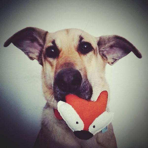 przydatne-komendy-fotografowanie-psow-blog-psach-01