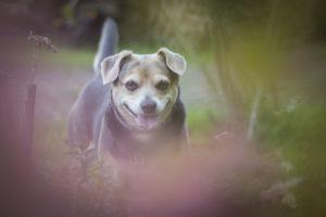 przydatne-komendy-fotografowanie-psow-blog-psach-02-300x200