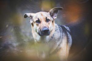 przydatne-komendy-fotografowanie-psow-blog-psach-03-300x200
