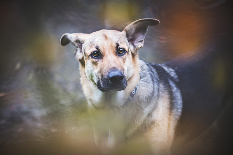 przydatne-komendy-fotografowanie-psow-blog-psach-03