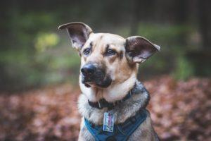 przydatne-komendy-fotografowanie-psow-blog-psach-04-300x200