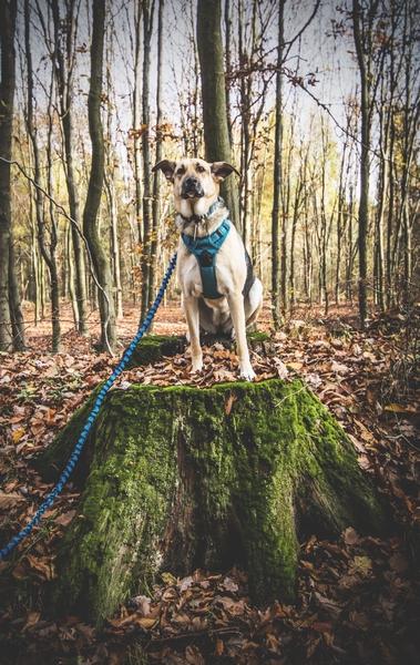 przydatne-komendy-fotografowanie-psow-blog-psach-05