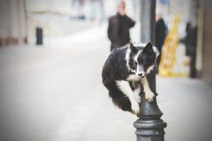 przydatne-komendy-fotografowanie-psow-blog-psach-07-300x200