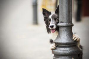 przydatne-komendy-fotografowanie-psow-blog-psach-08-300x200