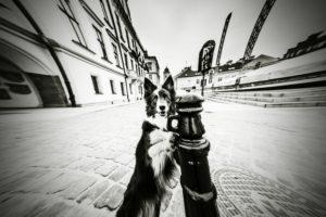 przydatne-komendy-fotografowanie-psow-blog-psach-09-300x200