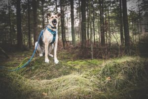 przydatne-komendy-fotografowanie-psow-blog-psach-10-300x200
