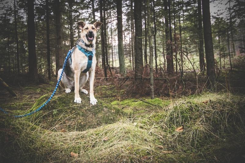 przydatne-komendy-fotografowanie-psow-blog-psach-10