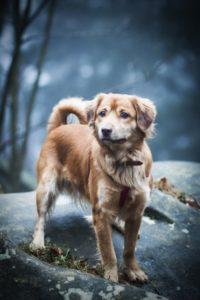 przydatne-komendy-fotografowanie-psow-blog-psach-11-200x300