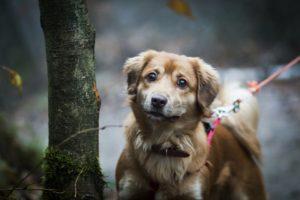 przydatne-komendy-fotografowanie-psow-blog-psach-12-300x200