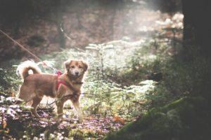 przydatne-komendy-fotografowanie-psow-blog-psach-13-300x200