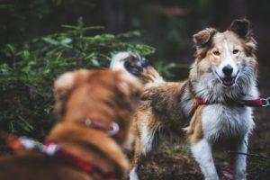przydatne-komendy-fotografowanie-psow-blog-psach-14-300x200