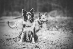 przydatne-komendy-fotografowanie-psow-blog-psach-15-300x200