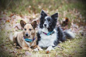 przydatne-komendy-fotografowanie-psow-blog-psach-16-300x200