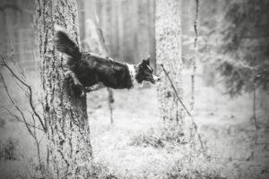 przydatne-komendy-fotografowanie-psow-blog-psach-17-300x200