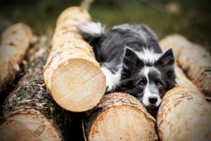 przydatne-komendy-fotografowanie-psow-blog-psach-18-300x200