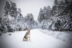 przydatne-komendy-fotografowanie-psow-blog-psach-21-300x200