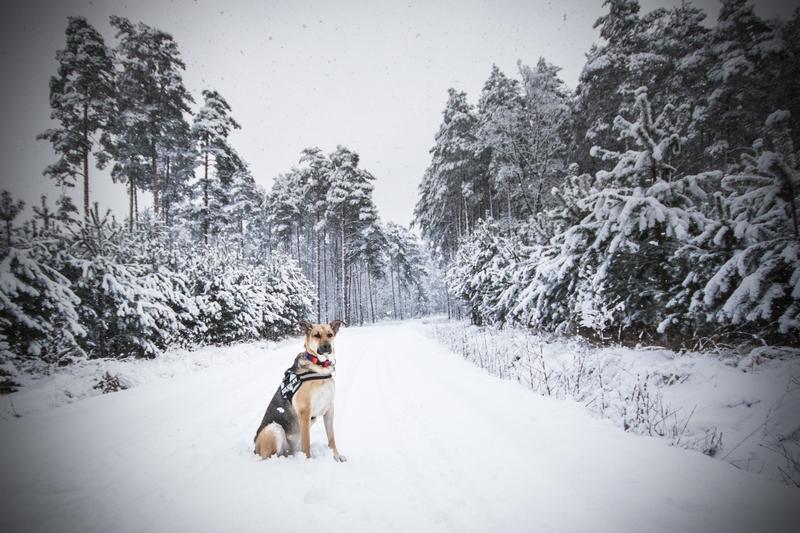 przydatne-komendy-fotografowanie-psow-blog-psach-21