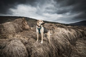 przydatne-komendy-fotografowanie-psow-blog-psach-22-300x200