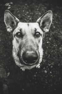 przydatne-komendy-fotografowanie-psow-blog-psach-23-200x300