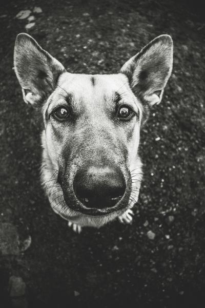przydatne-komendy-fotografowanie-psow-blog-psach-23