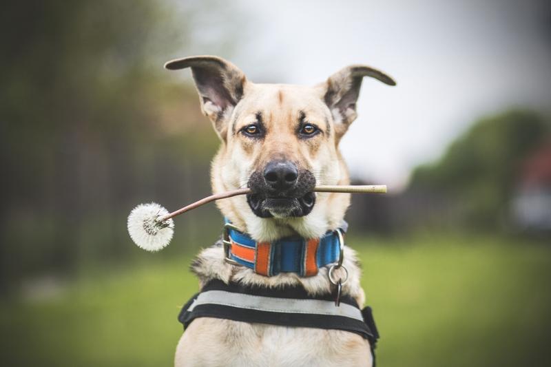 przydatne-komendy-fotografowanie-psow-blog-psach-25