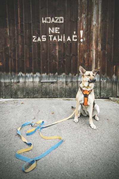 przydatne-komendy-fotografowanie-psow-blog-psach-28