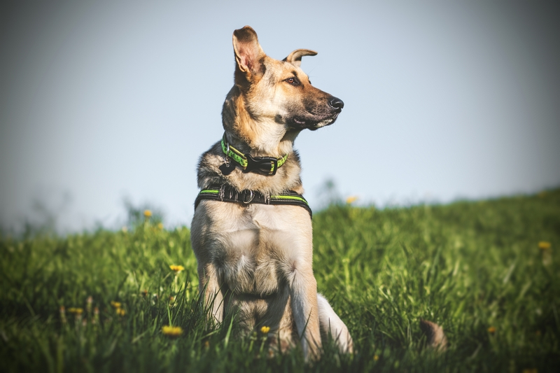 przydatne-komendy-fotografowanie-psow-blog-psach-30
