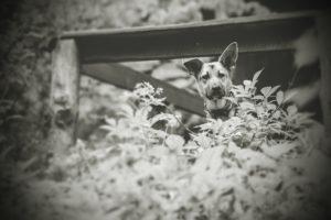przydatne-komendy-fotografowanie-psow-blog-psach-31-300x200