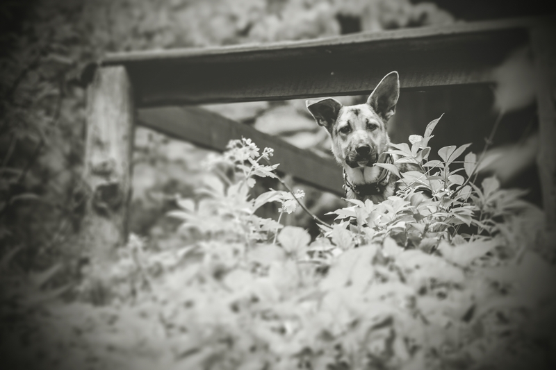 przydatne-komendy-fotografowanie-psow-blog-psach-31