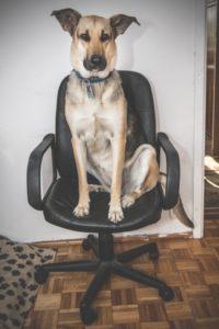 przydatne-komendy-fotografowanie-psow-blog-psach-32-200x300