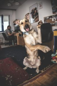 przydatne-komendy-fotografowanie-psow-blog-psach-33-200x300