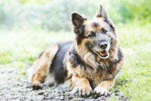 przydatne-komendy-fotografowanie-psow-blog-psach-34-300x200