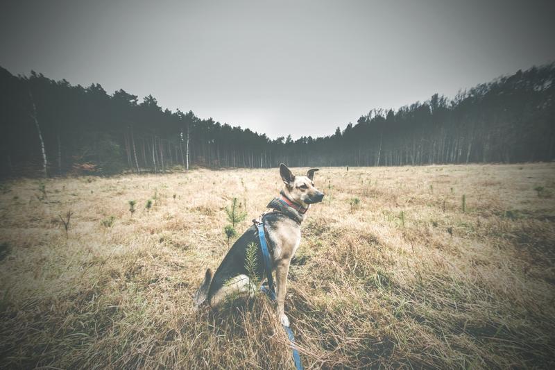 przydatne-komendy-fotografowanie-psow-blog-psach-35