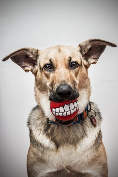 przydatne-komendy-fotografowanie-psow-blog-psach-36