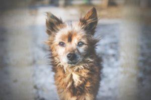 przydatne-komendy-fotografowanie-psow-blog-psach-38-300x200