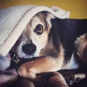 przydatne-komendy-fotografowanie-psow-blog-psach-40-300x300