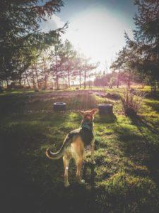 husinka-chatka-swieta-urlop-blog-psach-08-225x300