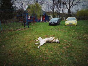 husinka-chatka-swieta-urlop-blog-psach-17-300x225